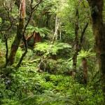 Urwald bei Purakaunui Falls