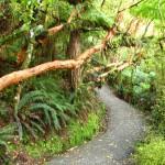 Pfad durch den Regenwald zu McLean Falls