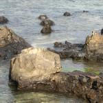 Versteinerte Baumstümpfe bei Curio Bay