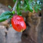 Blumendingsi