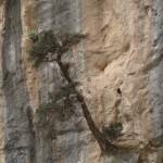 absurder Baum