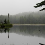 Beaver Pond Trail